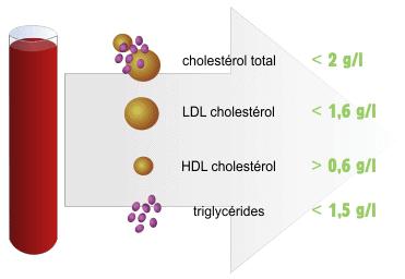 Bilan lipidique resultat