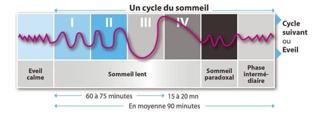 cycles du sommeil