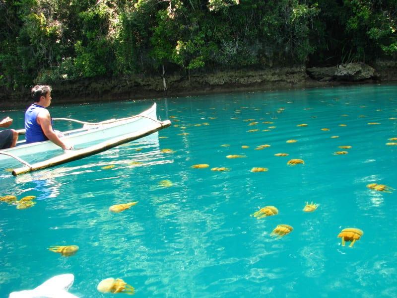 nager avec les meduses