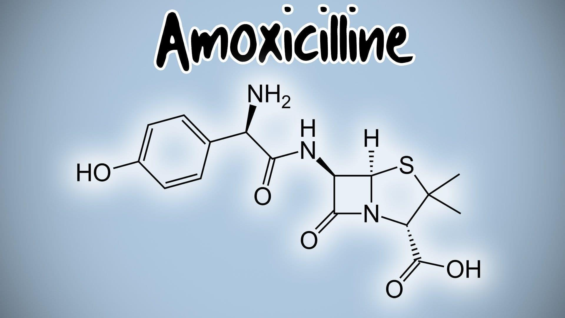 amoxicilline composition