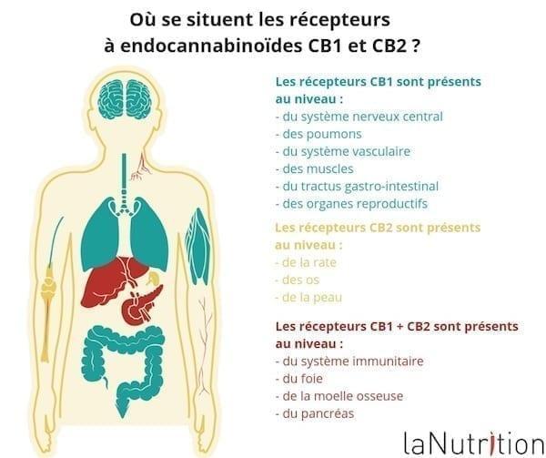 recepteurs Endocannabinoïde CB1 et CB2