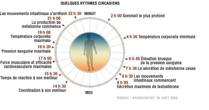 rythmes circadiens